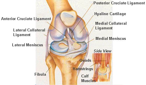 knee surgery guide, injuries and treatment unit, Human body